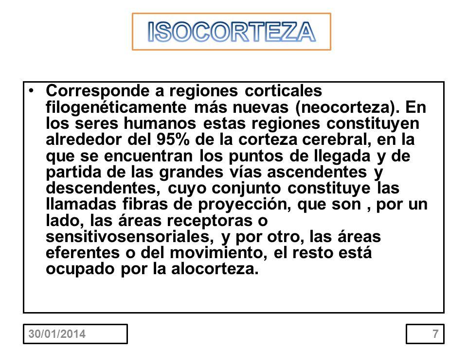 ISOCORTEZA