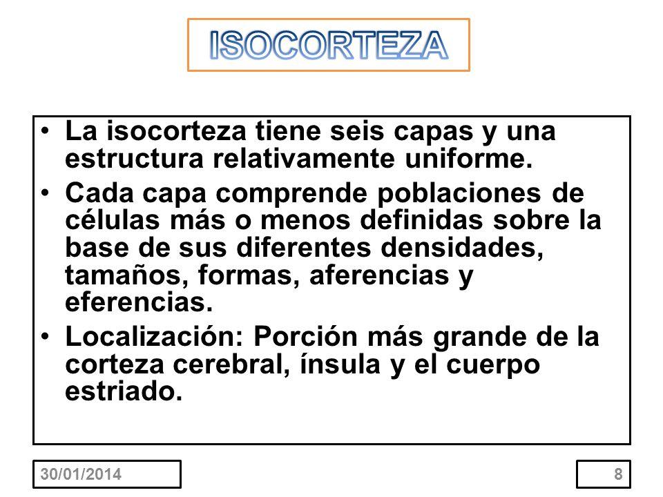 ISOCORTEZA La isocorteza tiene seis capas y una estructura relativamente uniforme.