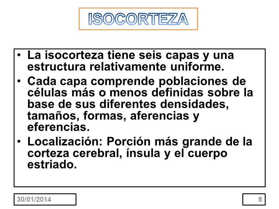 ISOCORTEZALa isocorteza tiene seis capas y una estructura relativamente uniforme.