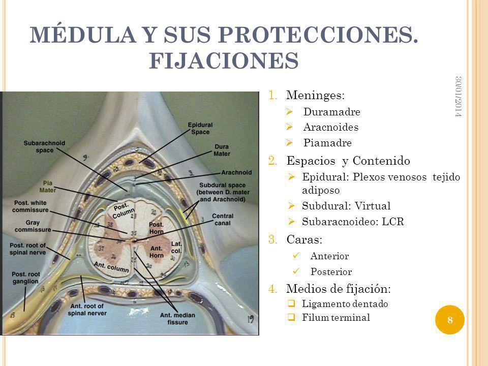 MÉDULA Y SUS PROTECCIONES. FIJACIONES