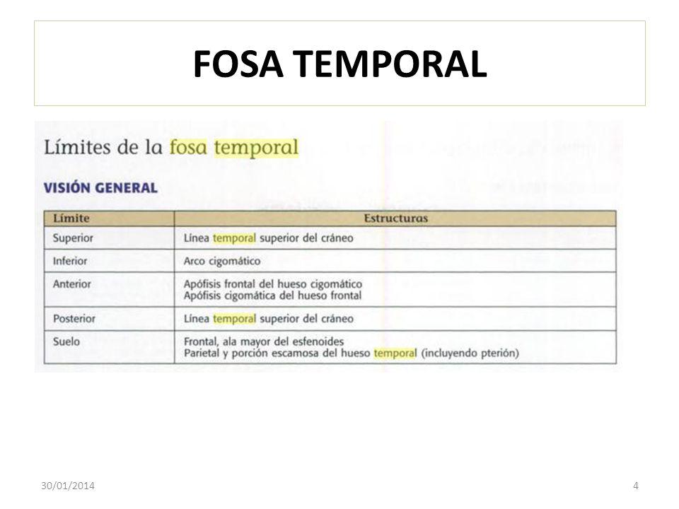 FOSA TEMPORAL 24/03/2017