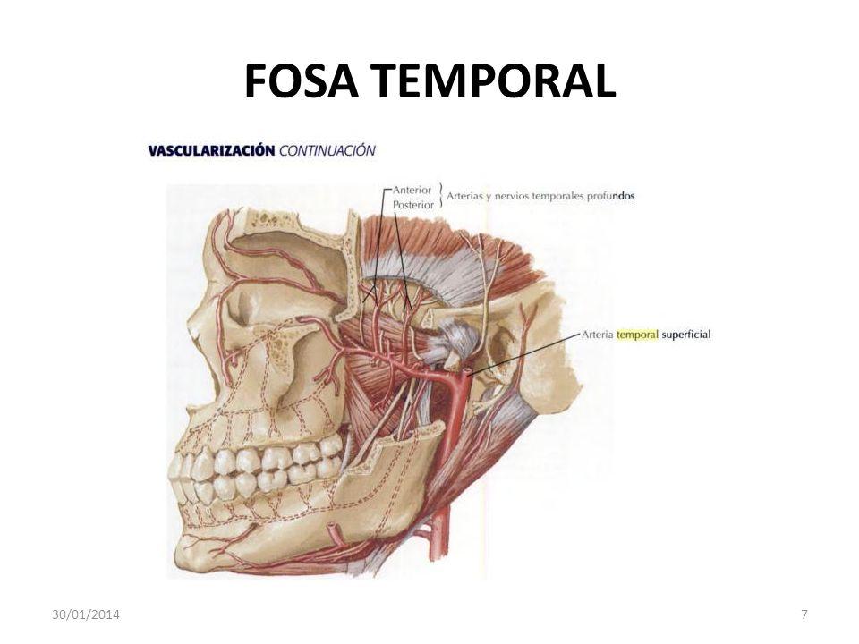 FOSA TEMPORAL 24/03/2017 7