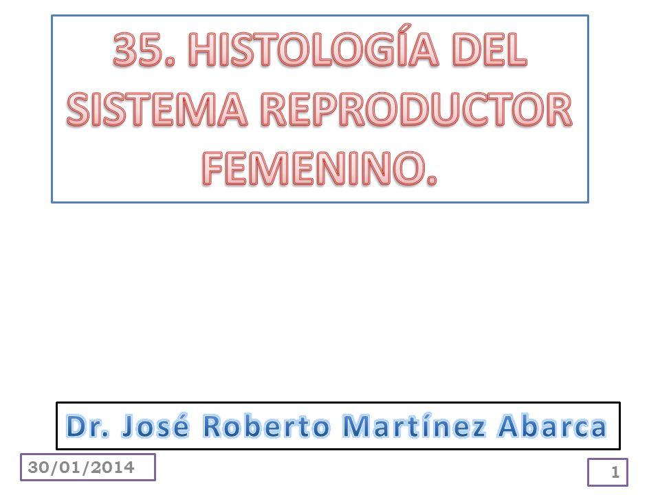 35. HISTOLOGÍA DEL SISTEMA REPRODUCTOR FEMENINO.