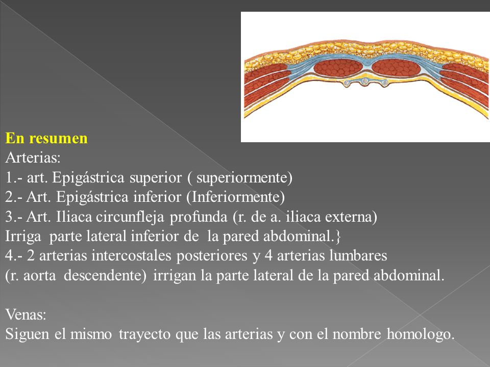 En resumen Arterias: 1.- art. Epigástrica superior ( superiormente) 2.- Art. Epigástrica inferior (Inferiormente)