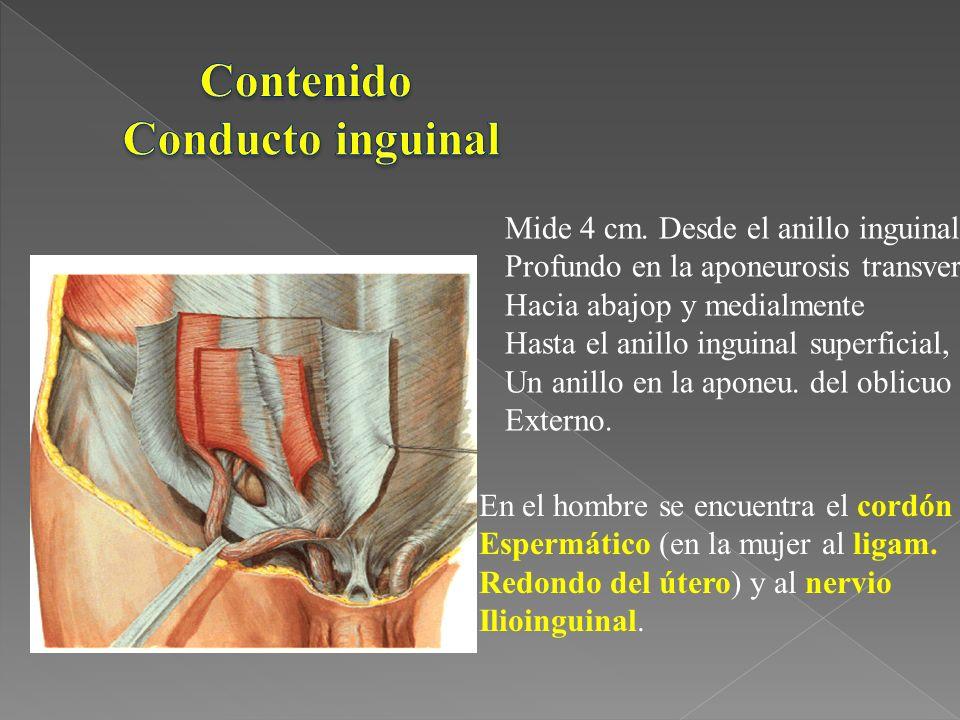 Contenido Conducto inguinal