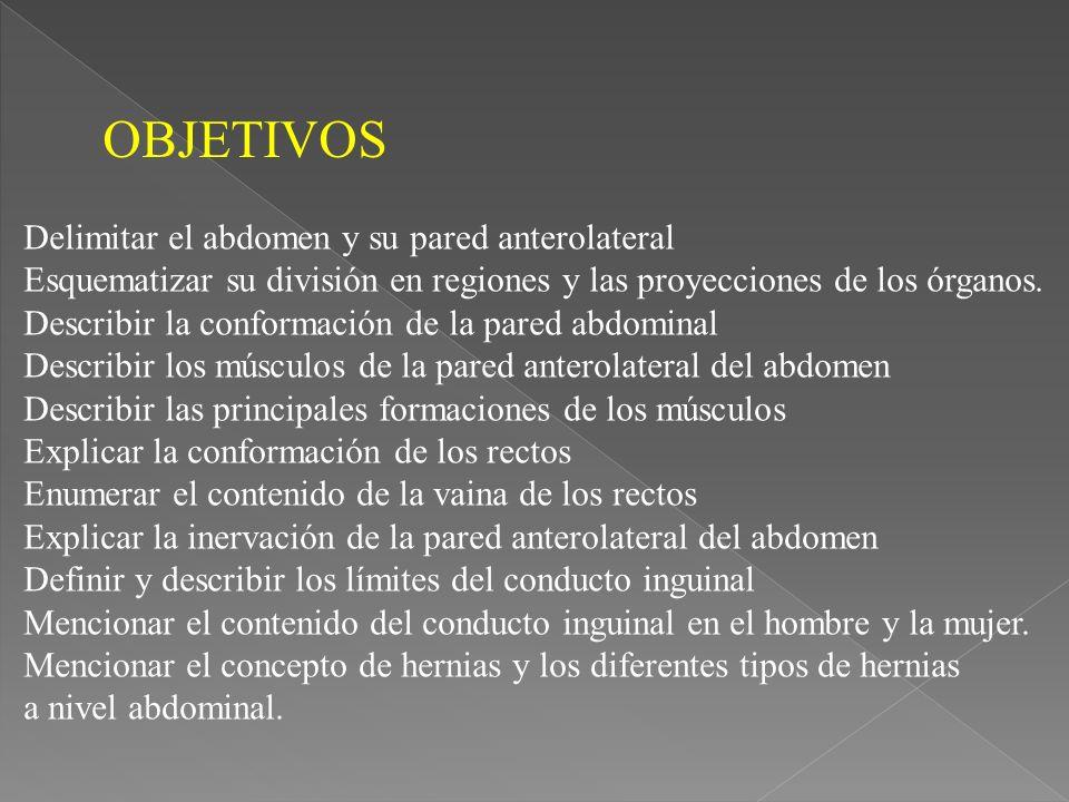 OBJETIVOS Delimitar el abdomen y su pared anterolateral