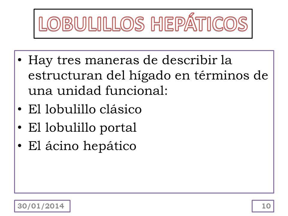 LOBULILLOS HEPÁTICOS Hay tres maneras de describir la estructuran del hígado en términos de una unidad funcional: