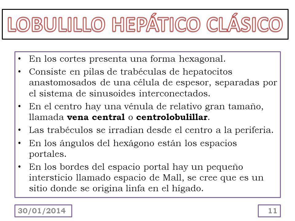 LOBULILLO HEPÁTICO CLÁSICO