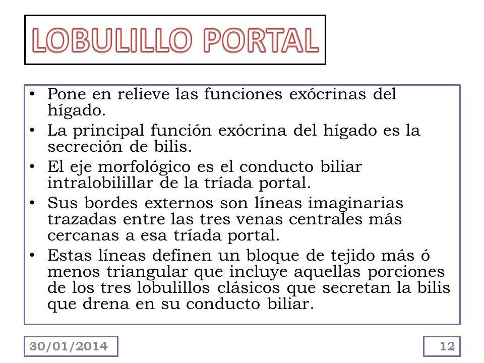 LOBULILLO PORTAL Pone en relieve las funciones exócrinas del hígado.
