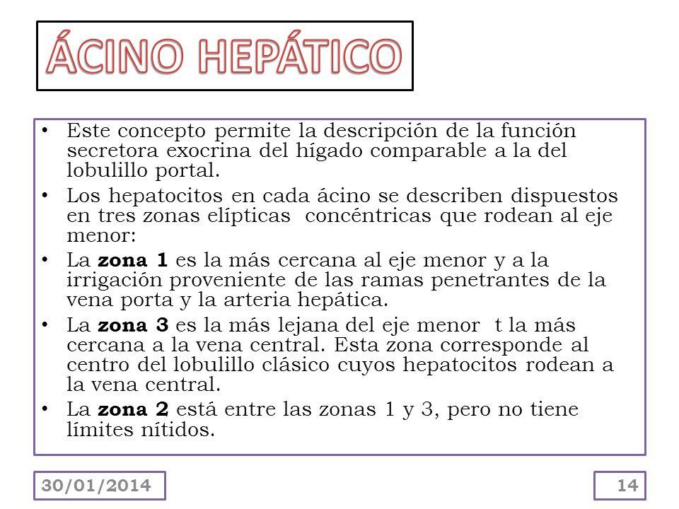 ÁCINO HEPÁTICO Este concepto permite la descripción de la función secretora exocrina del hígado comparable a la del lobulillo portal.