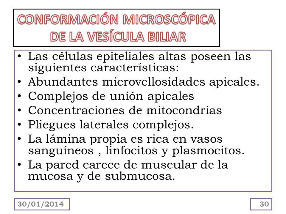 CONFORMACIÓN MICROSCÓPICA