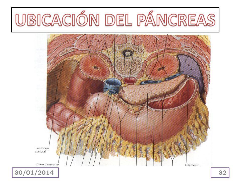UBICACIÓN DEL PÁNCREAS