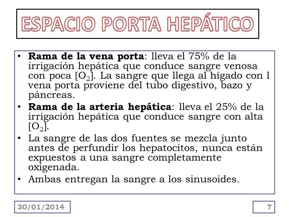 ESPACIO PORTA HEPÁTICO