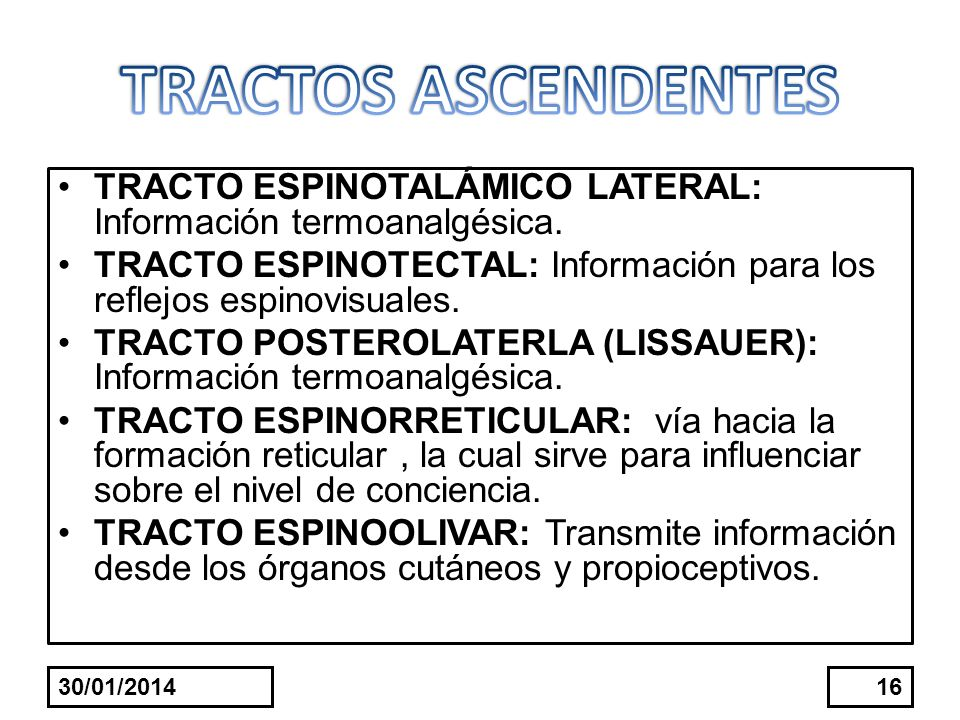 TRACTOS ASCENDENTES TRACTO ESPINOTALÁMICO LATERAL: Información termoanalgésica. TRACTO ESPINOTECTAL: Información para los reflejos espinovisuales.