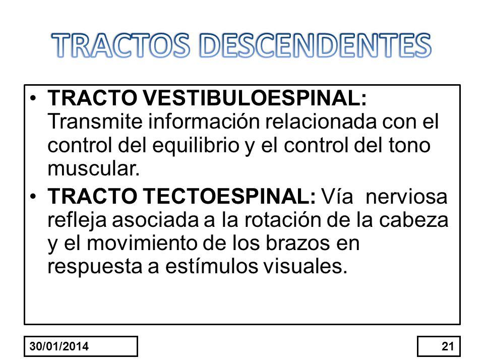 TRACTOS DESCENDENTESTRACTO VESTIBULOESPINAL: Transmite información relacionada con el control del equilibrio y el control del tono muscular.