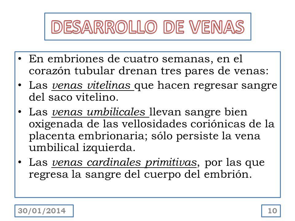 DESARROLLO DE VENAS En embriones de cuatro semanas, en el corazón tubular drenan tres pares de venas: