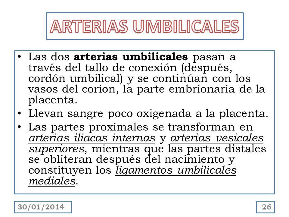 ARTERIAS UMBILICALES