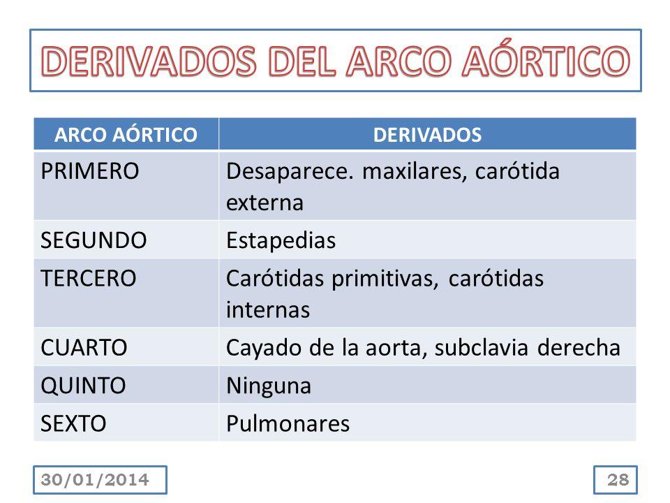 DERIVADOS DEL ARCO AÓRTICO
