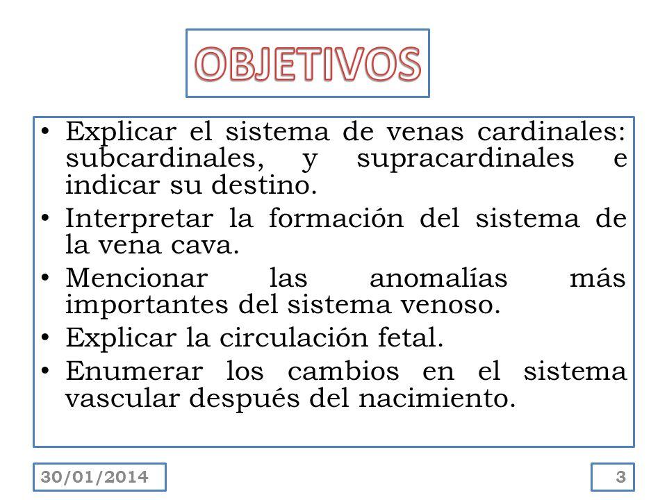 OBJETIVOS Explicar el sistema de venas cardinales: subcardinales, y supracardinales e indicar su destino.