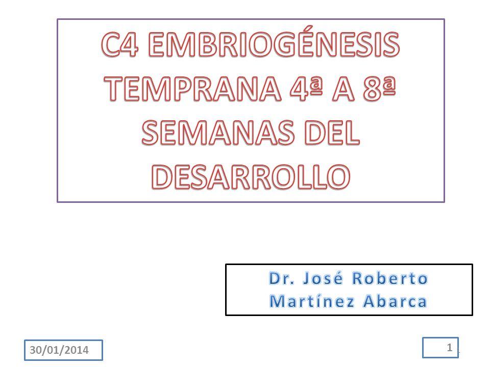 C4 EMBRIOGÉNESIS TEMPRANA 4ª A 8ª SEMANAS DEL DESARROLLO