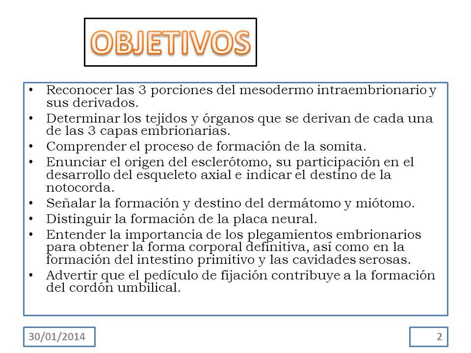 OBJETIVOS Reconocer las 3 porciones del mesodermo intraembrionario y sus derivados.