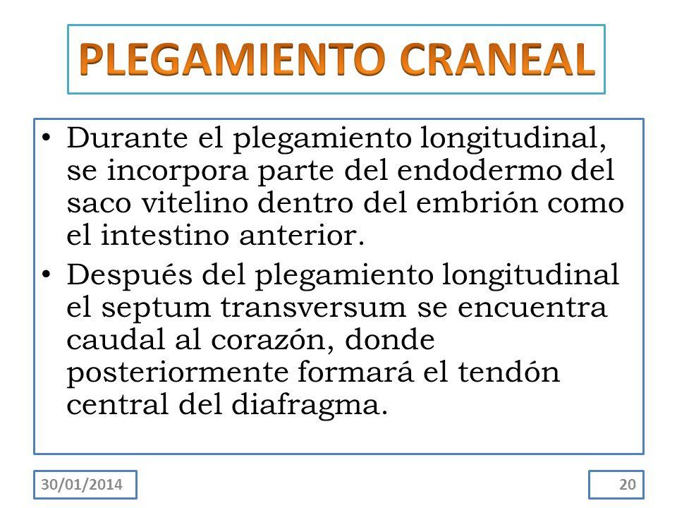 PLEGAMIENTO CRANEAL