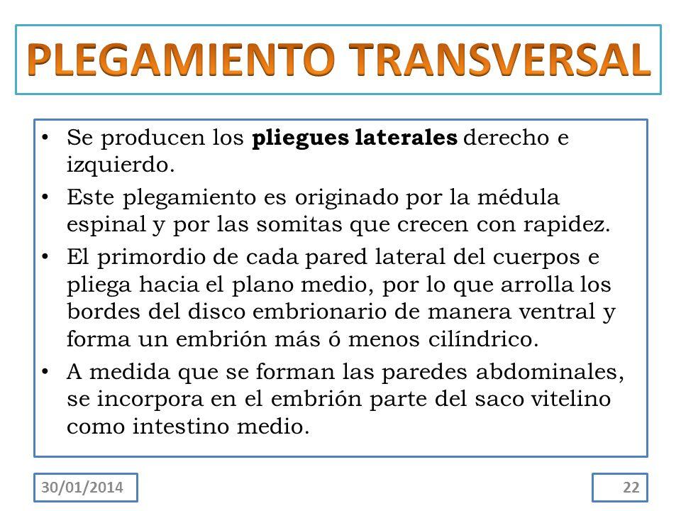 PLEGAMIENTO TRANSVERSAL