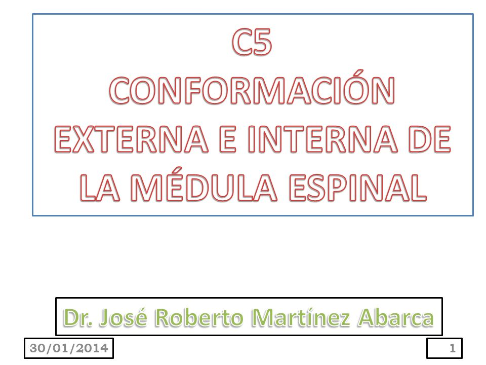 C5 CONFORMACIÓN EXTERNA E INTERNA DE LA MÉDULA ESPINAL