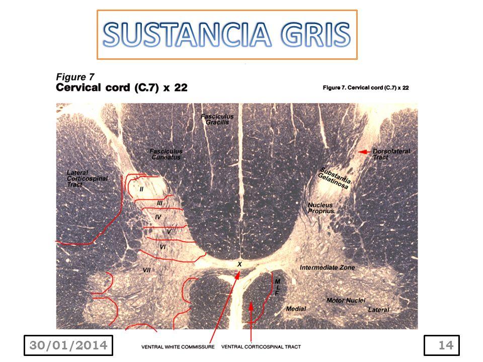 SUSTANCIA GRIS 24/03/2017