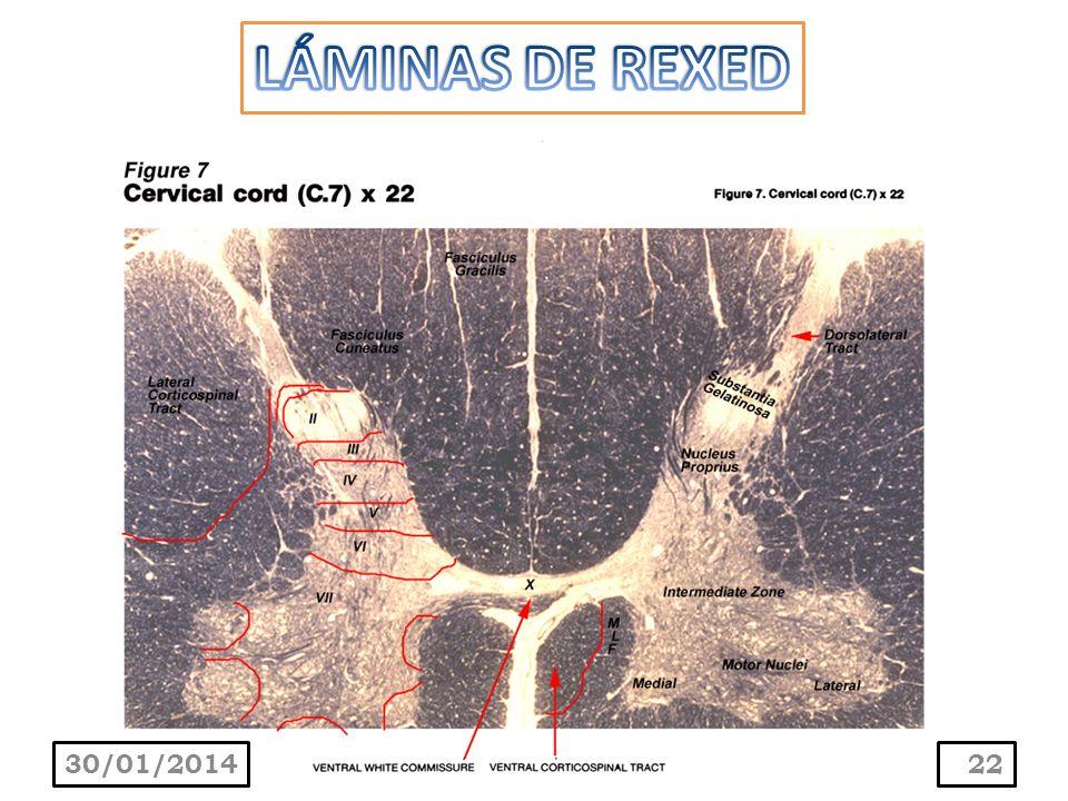 LÁMINAS DE REXED 24/03/2017
