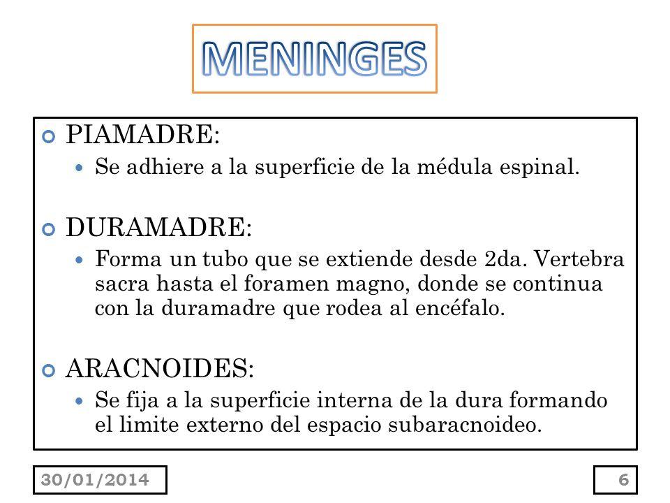 MENINGES PIAMADRE: DURAMADRE: ARACNOIDES:
