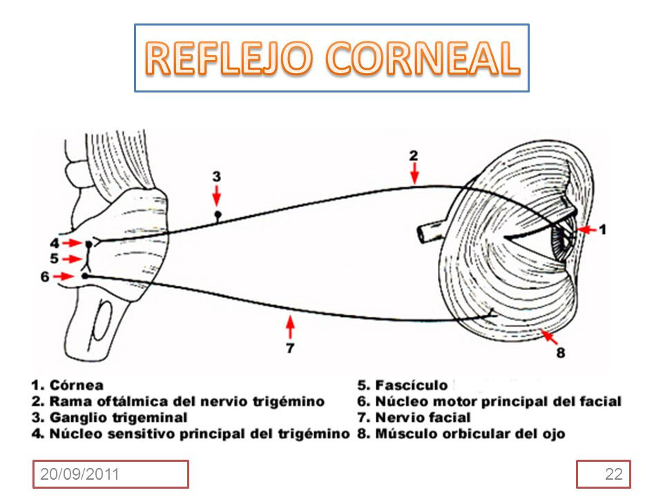 REFLEJO CORNEAL 20/09/2011