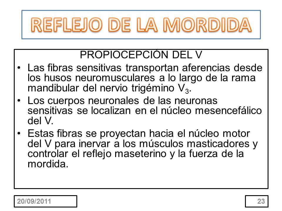 REFLEJO DE LA MORDIDA PROPIOCEPCIÓN DEL V