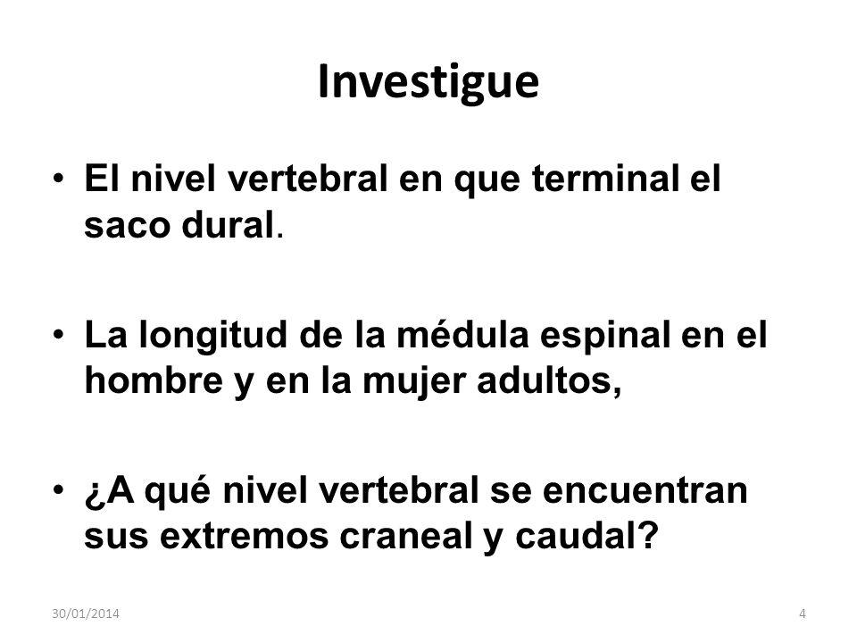 Investigue El nivel vertebral en que terminal el saco dural.