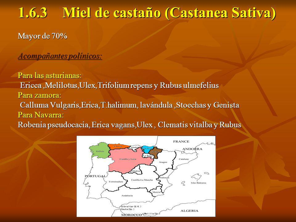 1.6.3 Miel de castaño (Castanea Sativa)