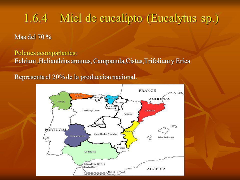 1.6.4 Miel de eucalipto (Eucalytus sp.)