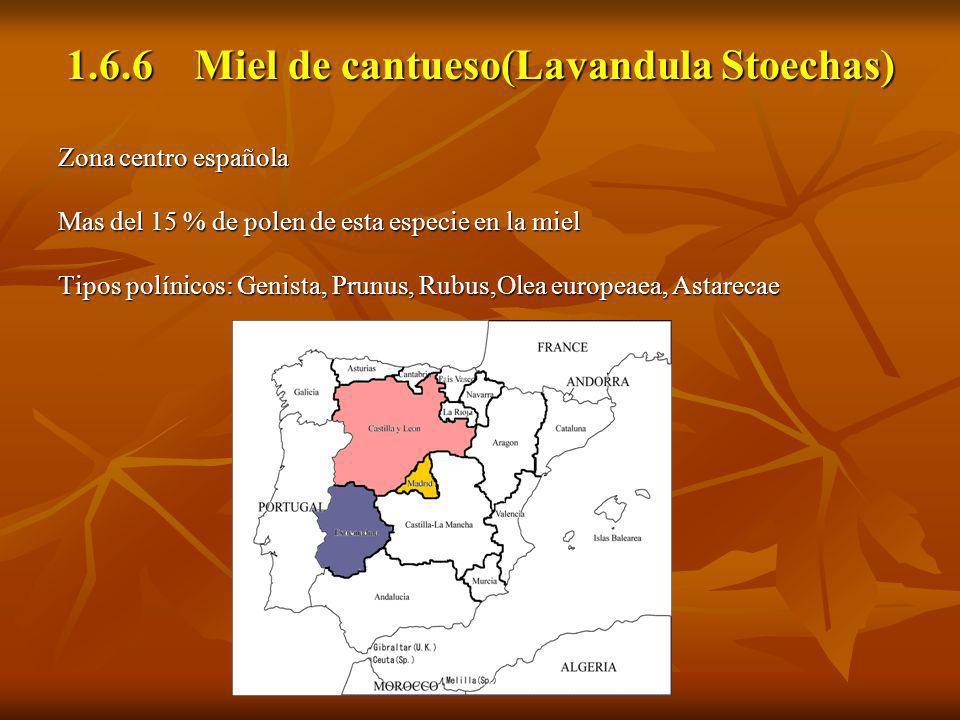1.6.6 Miel de cantueso(Lavandula Stoechas)