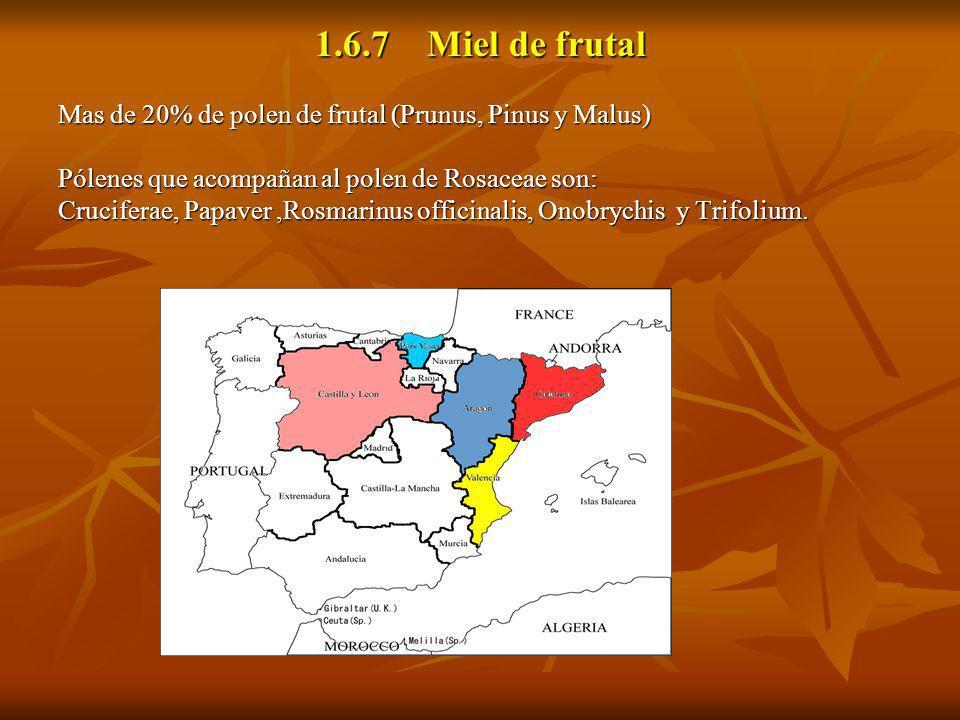 1.6.7 Miel de frutal Mas de 20% de polen de frutal (Prunus, Pinus y Malus) Pólenes que acompañan al polen de Rosaceae son: