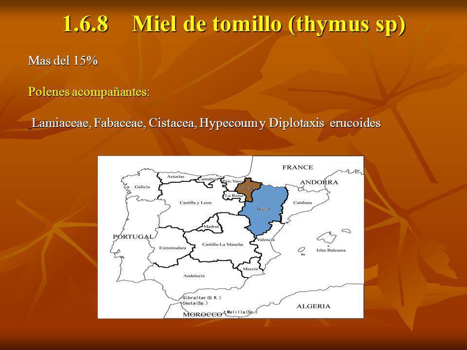 1.6.8 Miel de tomillo (thymus sp)