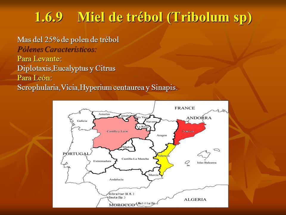 1.6.9 Miel de trébol (Tribolum sp)