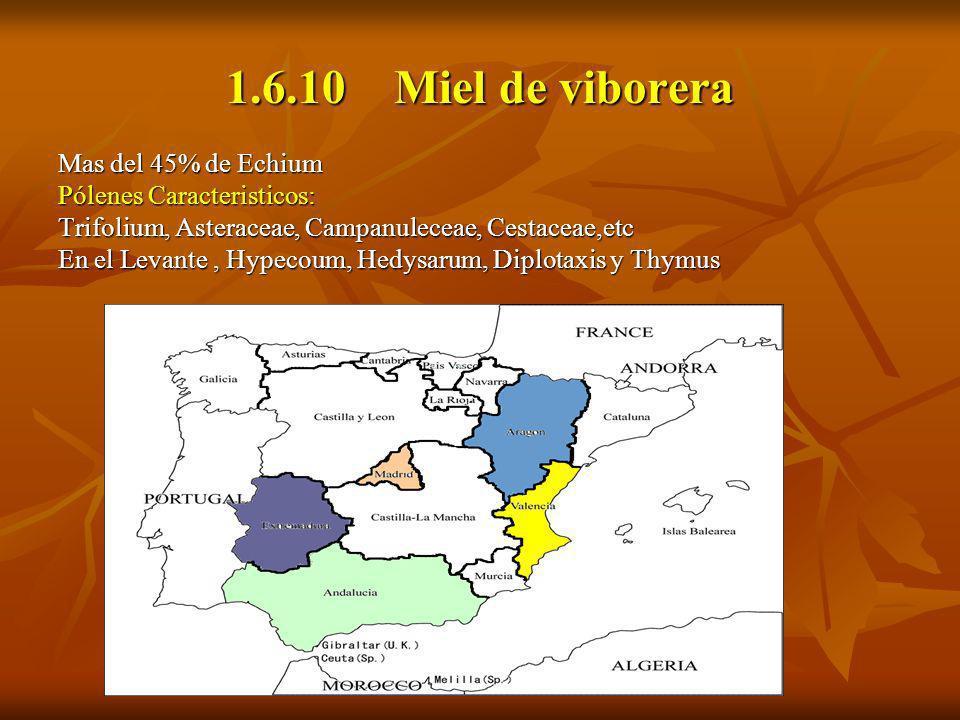 1.6.10 Miel de viborera Mas del 45% de Echium Pólenes Caracteristicos: