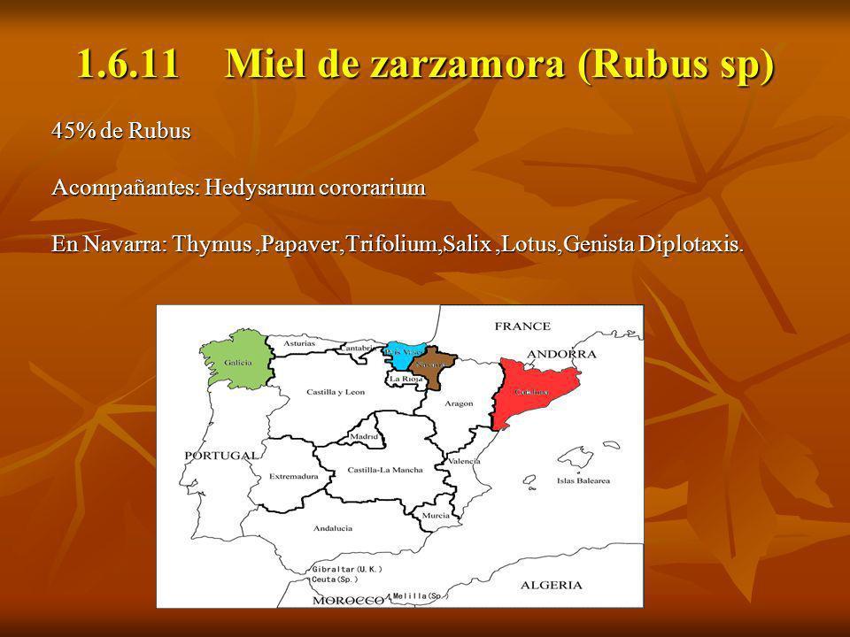 1.6.11 Miel de zarzamora (Rubus sp)