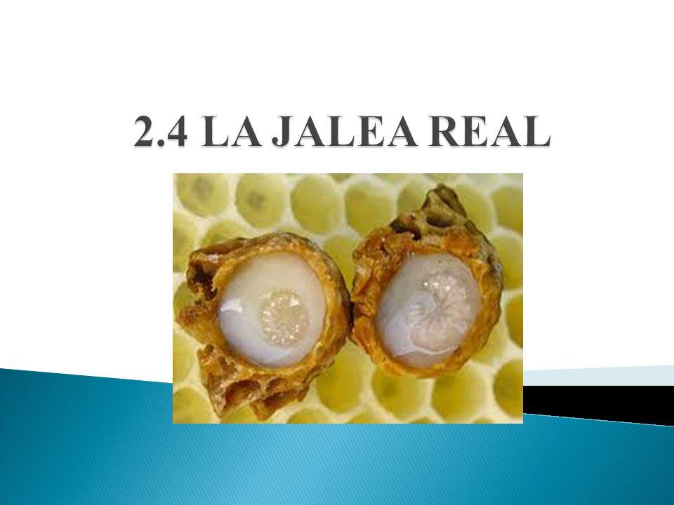 2.4 LA JALEA REAL