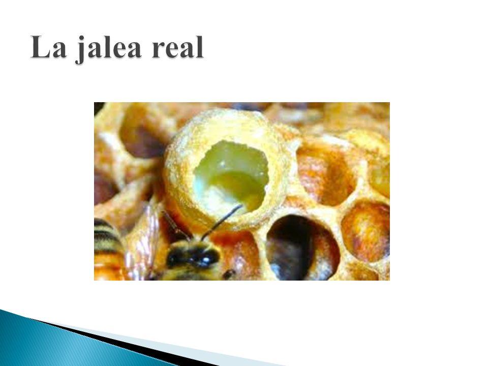 La jalea real