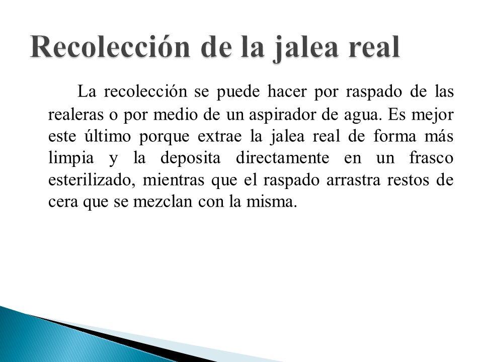 Recolección de la jalea real