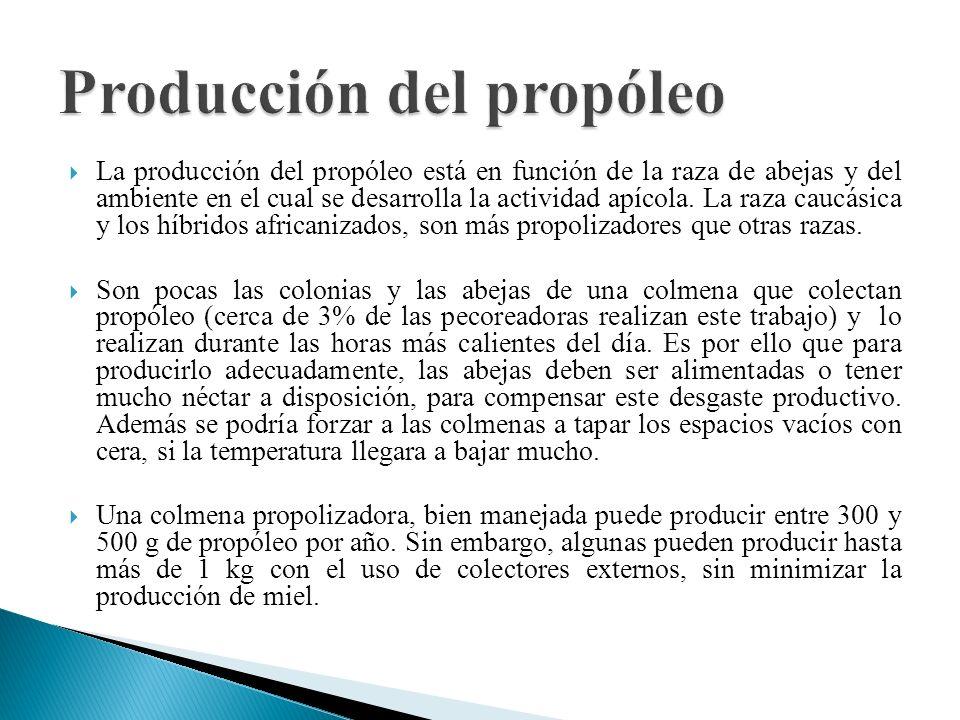 Producción del propóleo