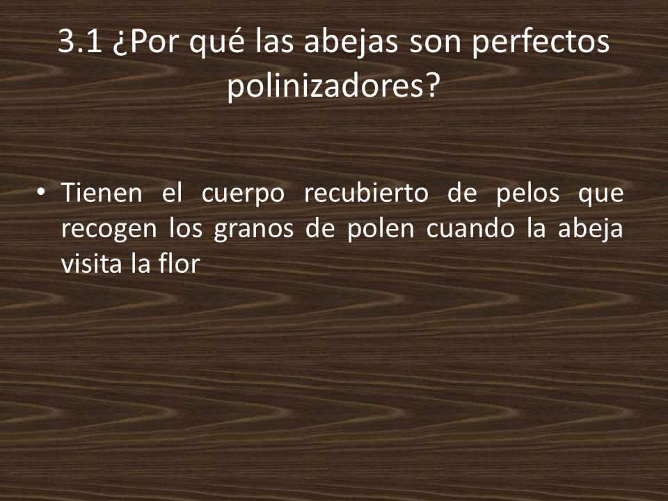 3.1 ¿Por qué las abejas son perfectos polinizadores