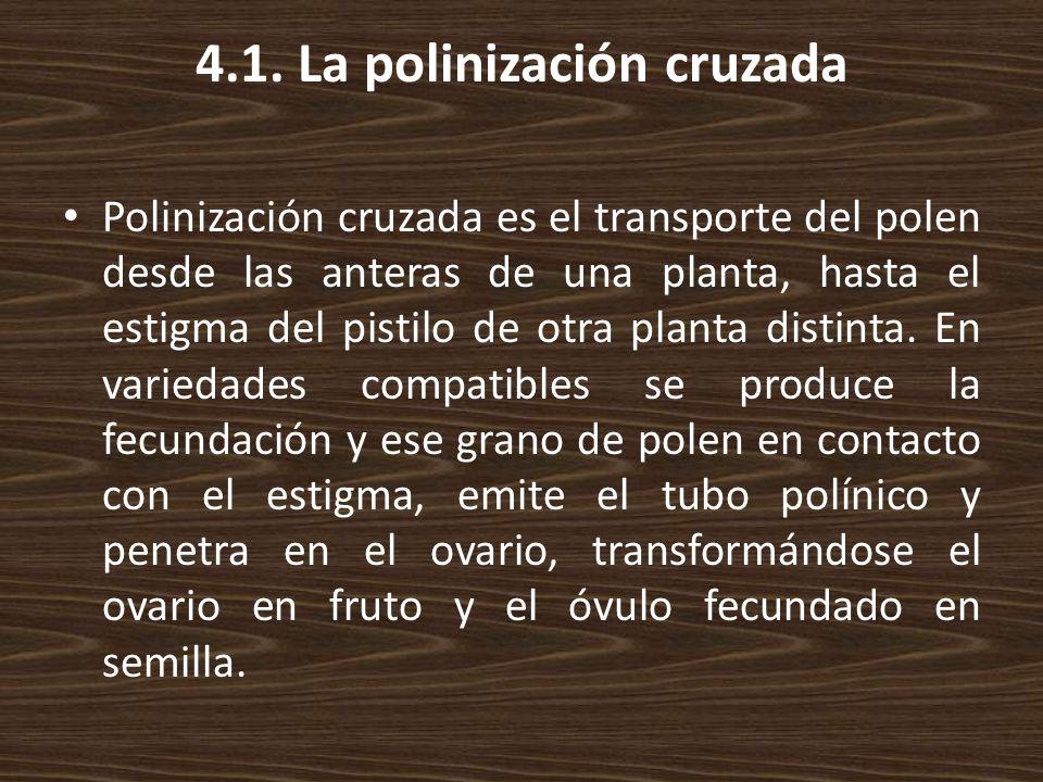 4.1. La polinización cruzada