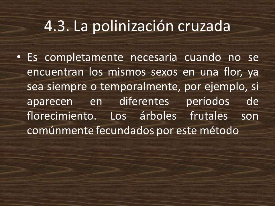 4.3. La polinización cruzada