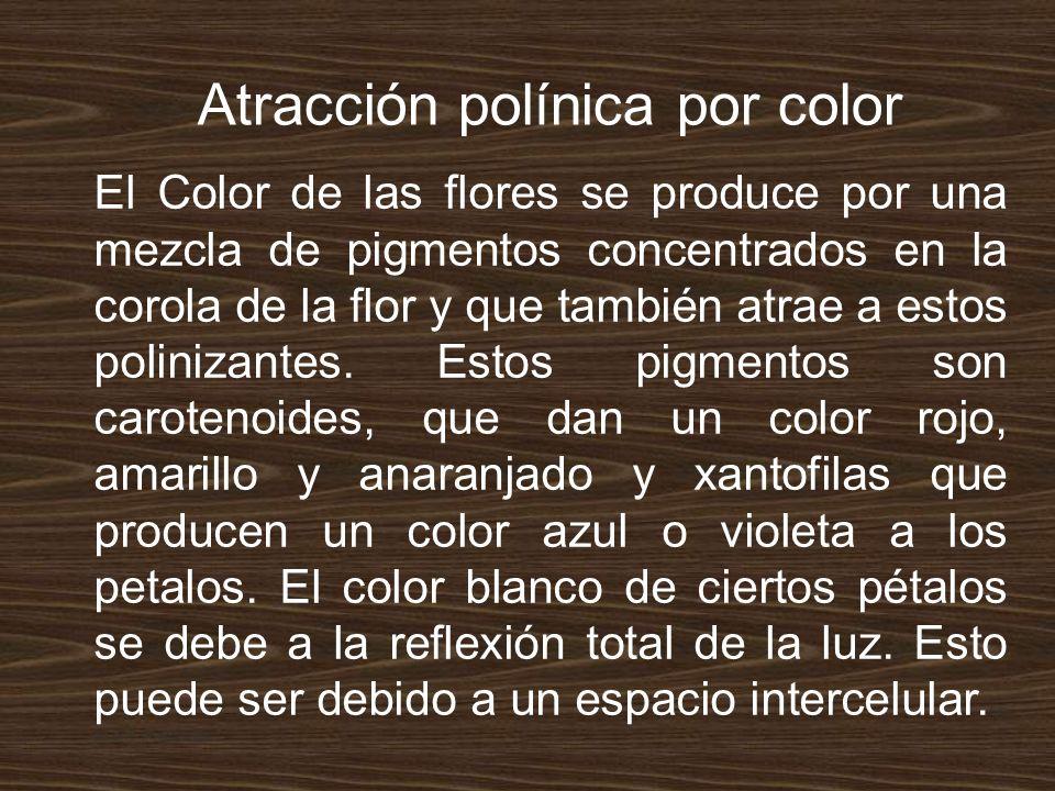 Atracción polínica por color